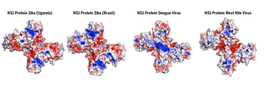 Four views of the NS1 protein