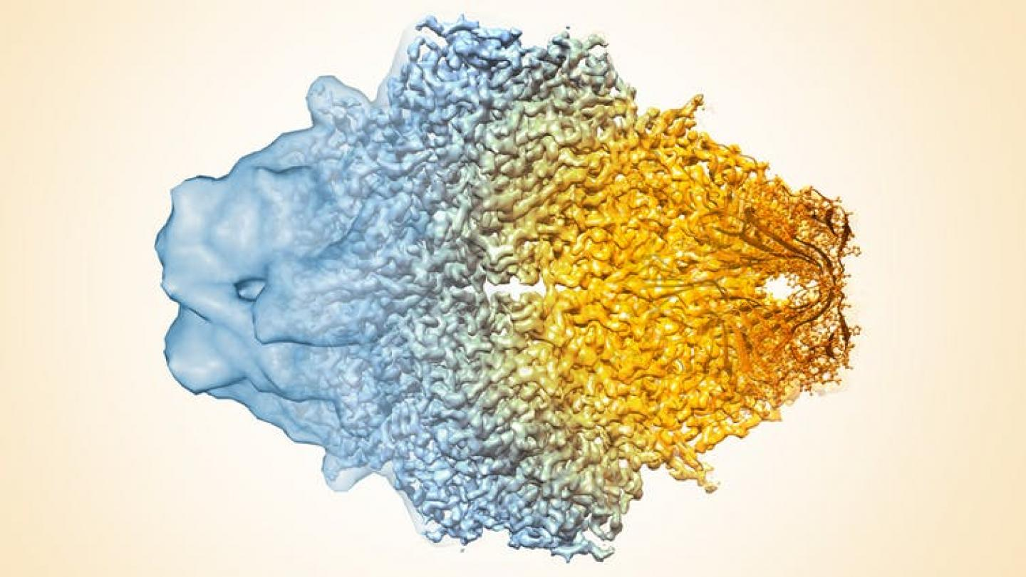 cryo-EM evolution (Credit: Veronica Falconieri, Sriram Subramaniam, National Cancer Institute, National Institutes of Health CC BY-NC 2.0)