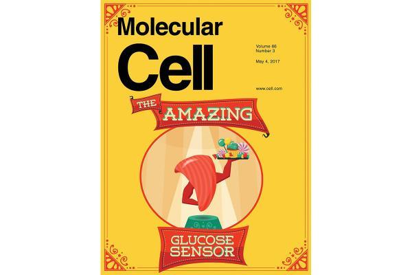 Jiandie cover Molecular Cell