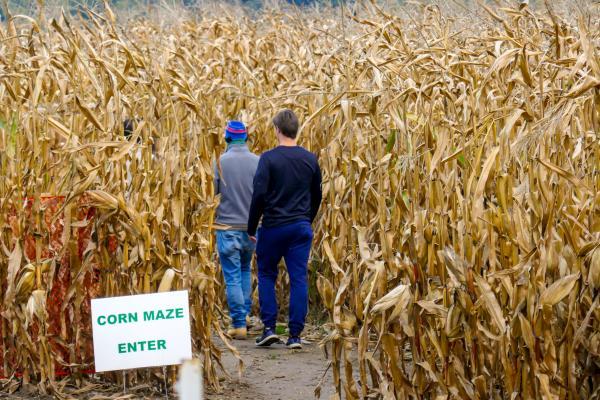 Lee lab in corn maze