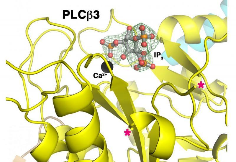 structure of PLCbeta3
