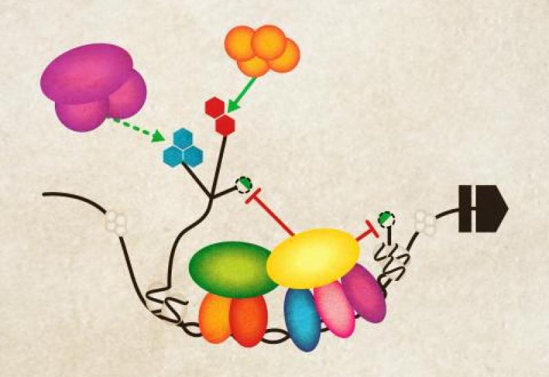 Molecular illustration