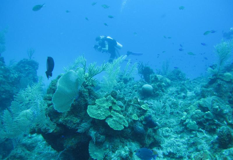 Amy Fraley explores an ecologically diverse sites within the Maria la Gorda reef system in Cuba