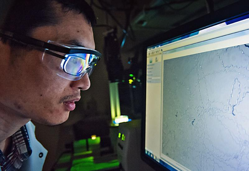 Scientist examines image on a computer screen